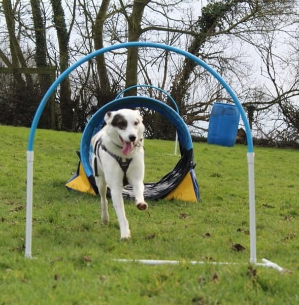 Canine Hoopers Classes